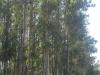 Arboreda_14