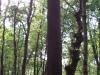 Arboreda_20